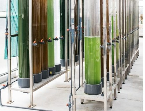 Aplicaciones industriales de las microalgas