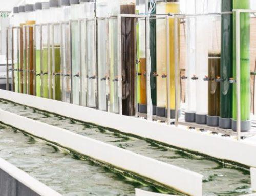 Microalgas: Propiedades y aplicaciones de cinco especies