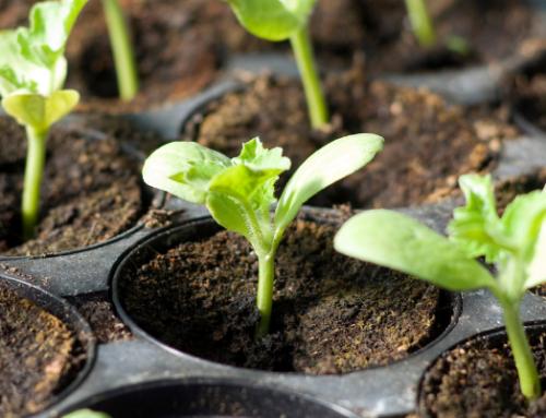 Neoalgae ya está disponible también en el Marketplace online de Claire Global